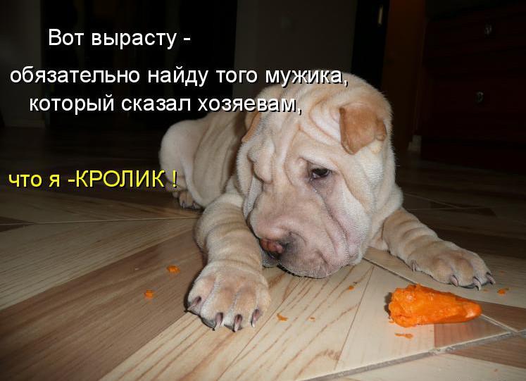 Картинки смешные собаки со словами, открытку надписями онлайн