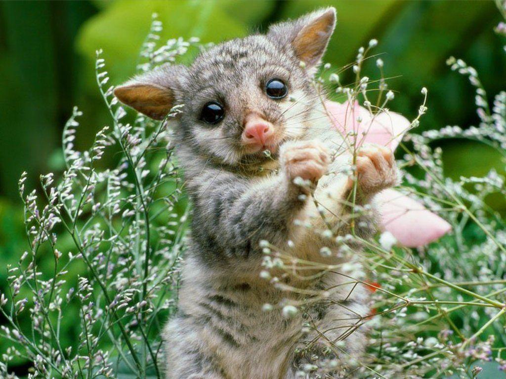 сообщалось, смотреть фото забавные животные прекрасно поёт украинском