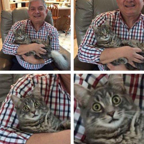 Фото-приколы с кошками (30 фото)