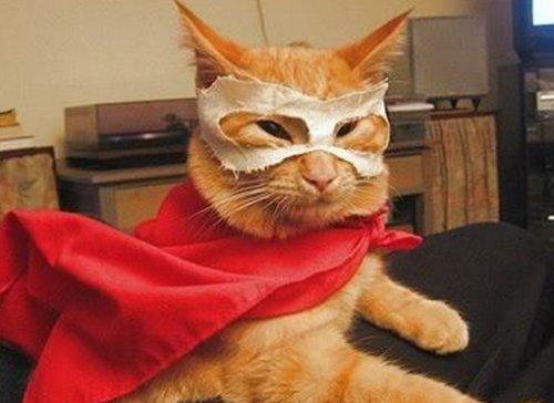 Кошки-супергерои (10 фото)