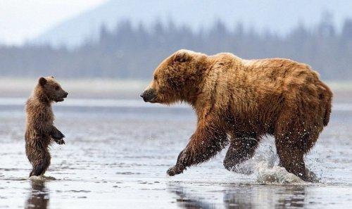 Медвежьи обнимашки:) (7 фото)