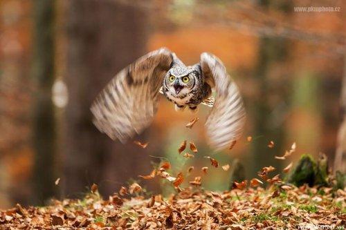 Умилительные совы (18 фото)