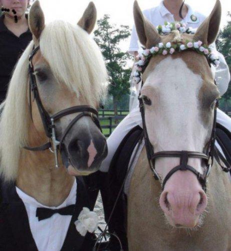 Милые животные в свадебных нарядах (18 фото)