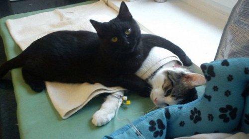 В приюте для животных в Польше появился кот-медбрат