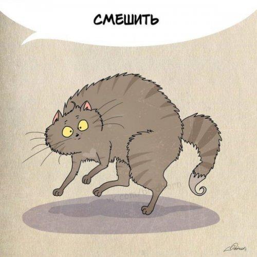 Юмор: Нам есть чему поучиться у котиков (10 фото)