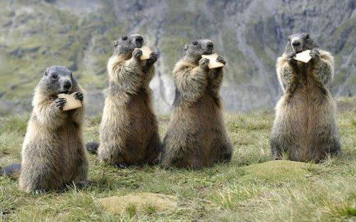 Смешные и забавные животные (56 фото)