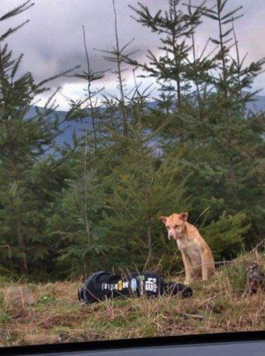 Очень трогательное спасение собаки (10 фото)