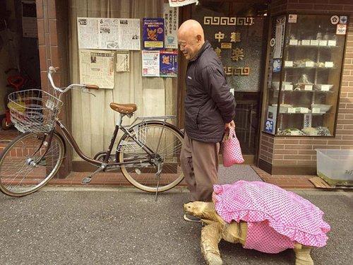 Как выгулять черепаху или самый терпеливый хозяин на свете (4 фото)