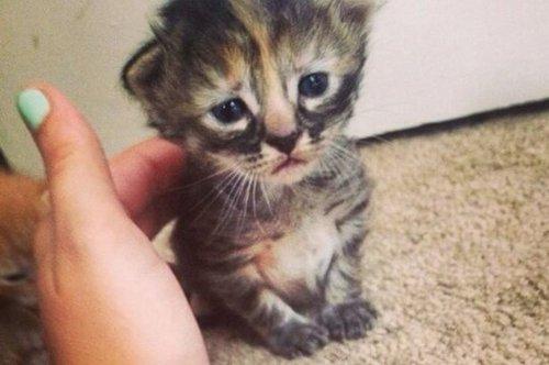 Кошачий позитив (36 фото)