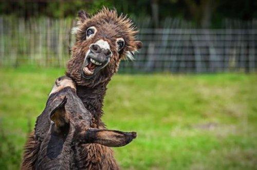 Забавные дикие животные (39 фото)