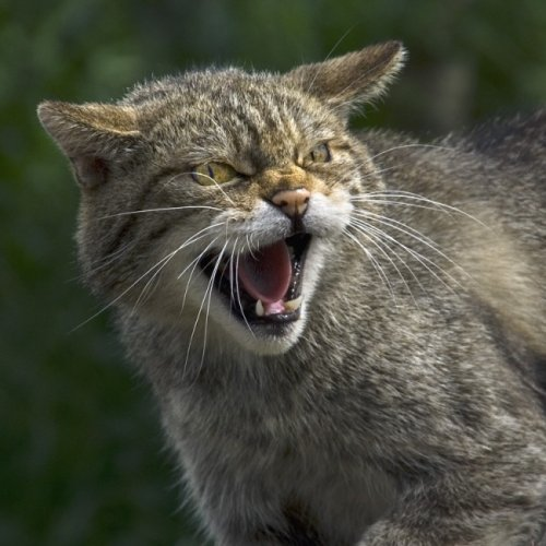 Сильные духом дворовые коты (19 фото)
