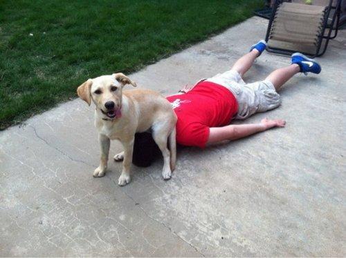 Собаки и кошки, которые любят похулиганить (18 фото)