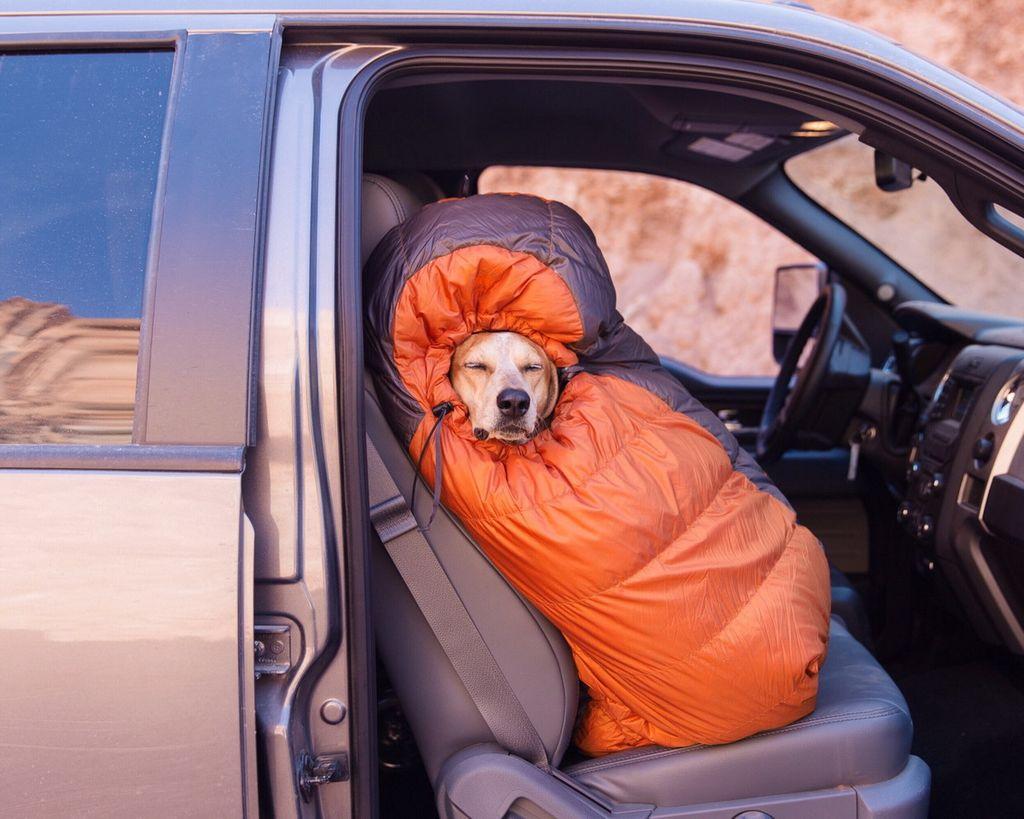 Смешные картинки про поездки на машине взыскал