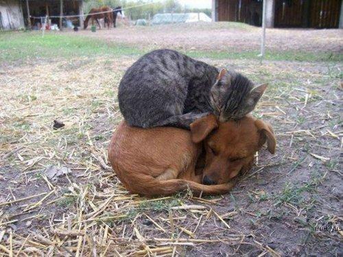 У котов тоже бывают свои понедельники (20 фото)