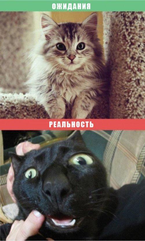Жизнь с кошкой: ожидания vs. реальность (10 фото)