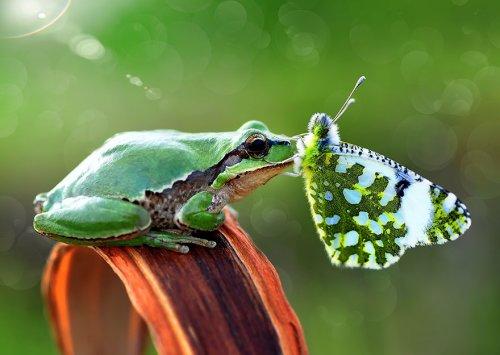 Очаровательные бабочки с различными животными (19 фото)
