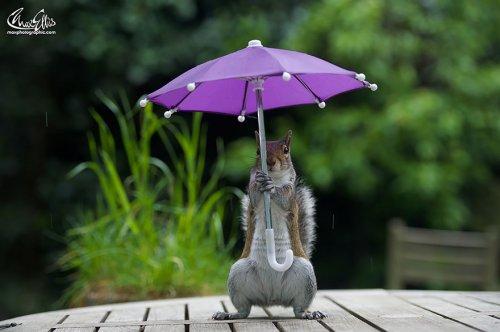 Белочка под зонтиком (5 фото)
