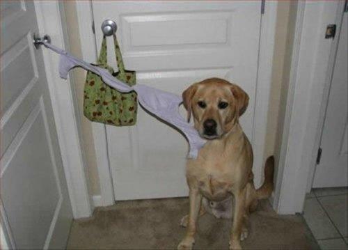 Домашние животные, застигнутые на месте преступления (18 фото)