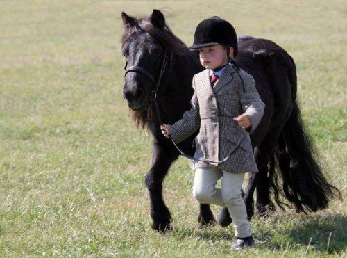 Миниатюрные лошадки (25 фото)