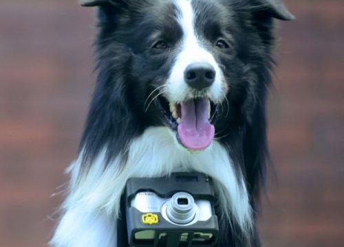 Первая в мире собака-фотограф (14 фото+видео)