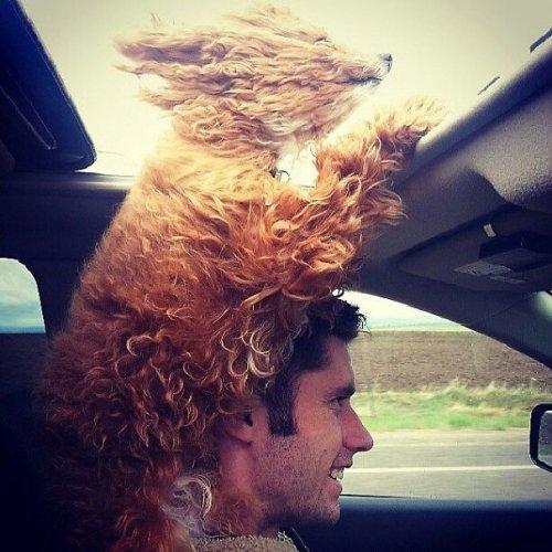 Собаки, которые любят езду на автомобиле больше всего на свете (28 фото)