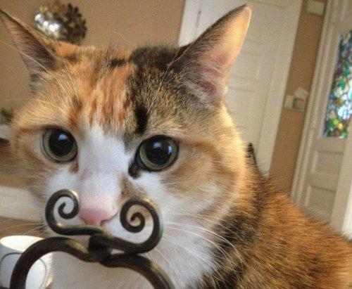 Смешные и забавные кошки (36 фото)