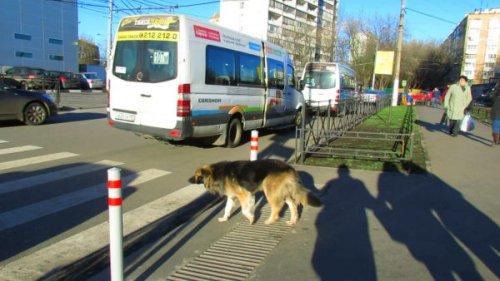 Правильные пешеходы