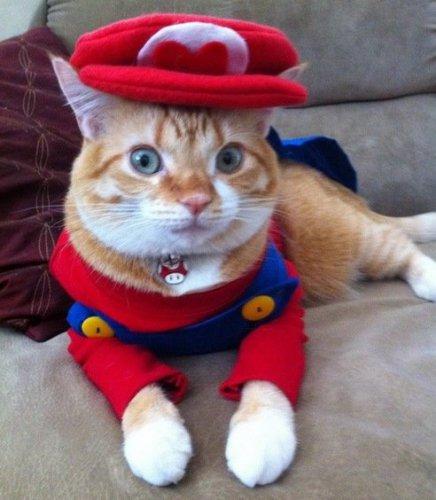 Кошки в образе Марио (10 фото)