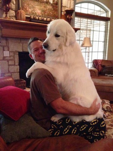 Очаровательные большие собаки (35 фото)