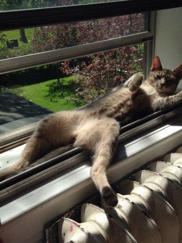 Смешные и забавные кошки (30 фото)