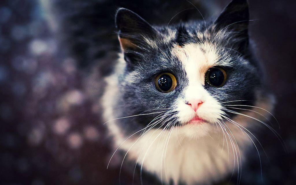 фото на аву животные красивые кошки самом деле