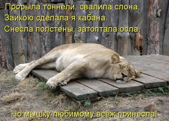 Фотки про животных смешные с надписями, своими марта