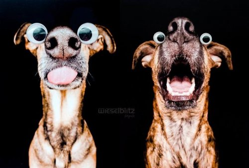 Забавные фотопортреты собак от Ельке Фогельзанг (17 фото)