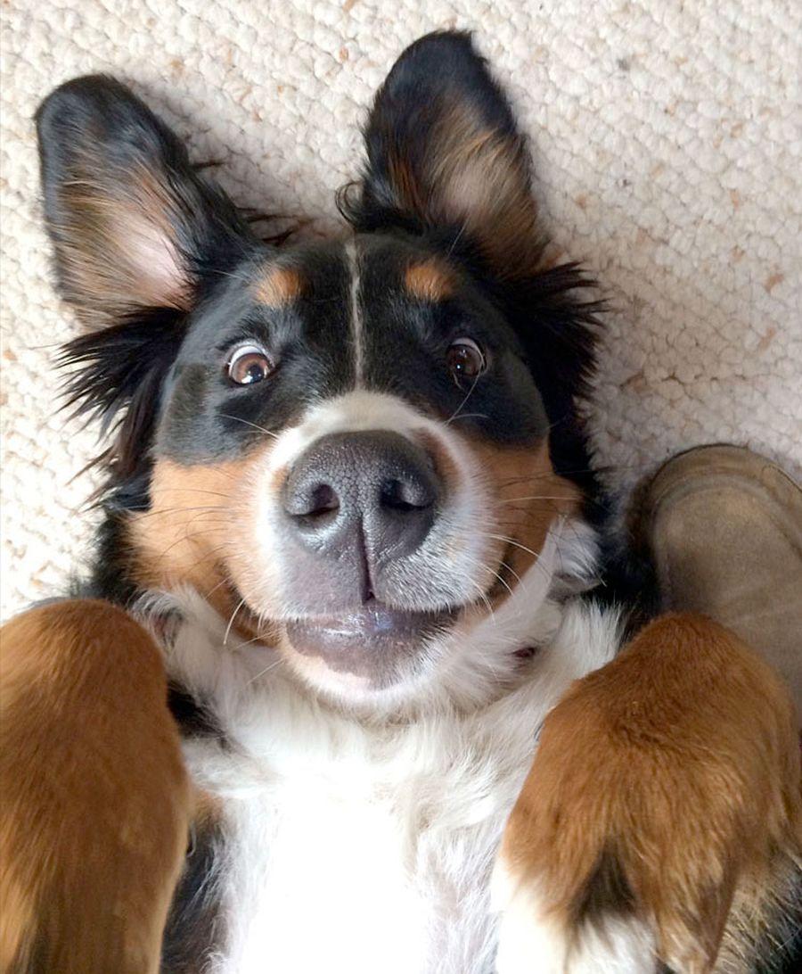 Лучшему другу, смешные картинки щенки собаки