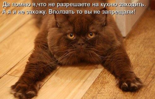Котоматрица для хорошего настроения! (30 фото)