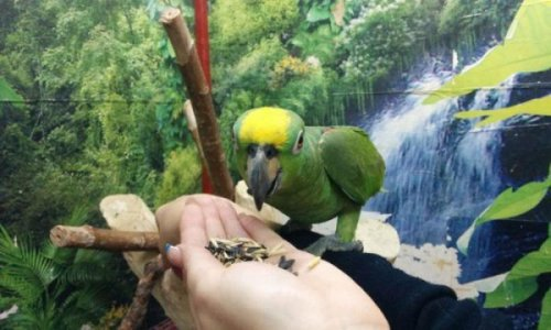 Юмор: Весёлое объявление о продаже попугая