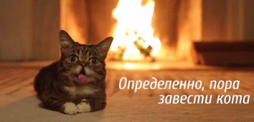 7 веских причин завести кота