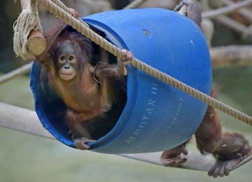 Забавные детёныши животных в зоопарках мира (56 фото)