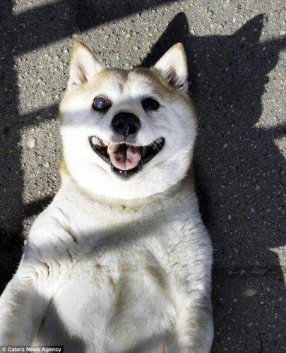 Самая улыбчивая собака в мире!(10 фото)