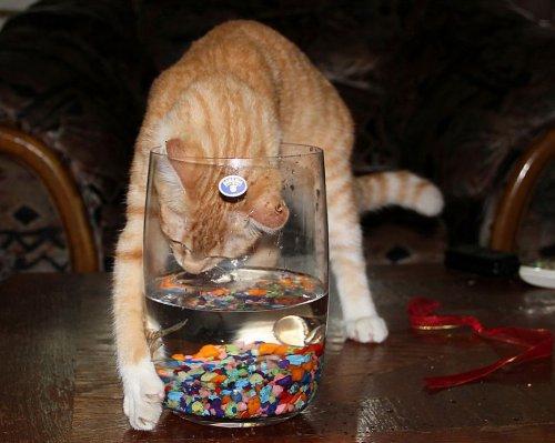 Смешные и забавные кошки (40 фото)