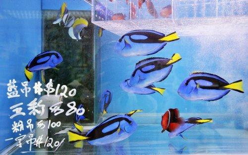 Золотые рыбки на рынке Гонконга (11 фото)