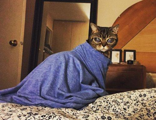 Лупоглазая кошка по кличке Матильда стала звездой в Instagram (5 фото)