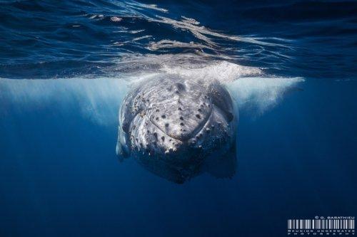 Удивительные подводные фотографии китов (11 фото)