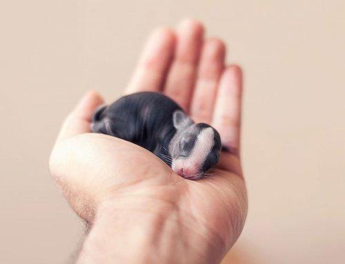 Первые 30 дней из жизни крольчонка (16 фото)