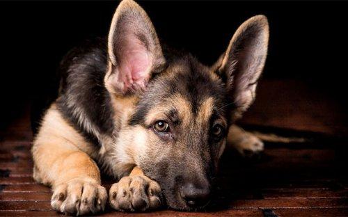 О чём говорит с вами собака (8 фото)