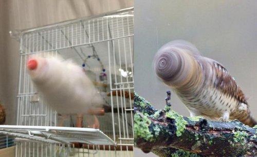 Забавные фотографии животных в момент движения  (9 фото)