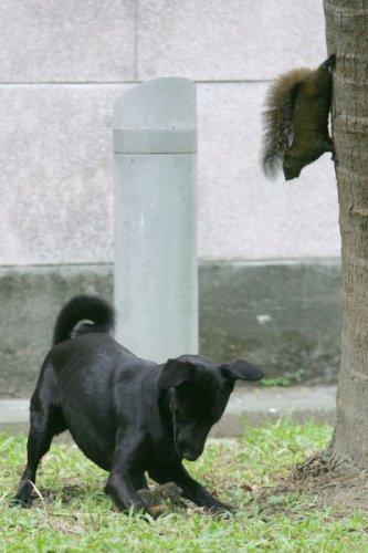 Когда белка увидела, как собака напала на её малыша, она сделала невероятное  (4 фото)