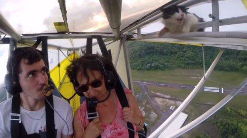 «Перед полётом уберите кота»: в небе пилот обнаружил на крыле легкомоторного самолёта кота