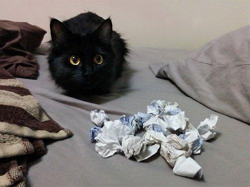 Кошки-хулиганки (28 фото)