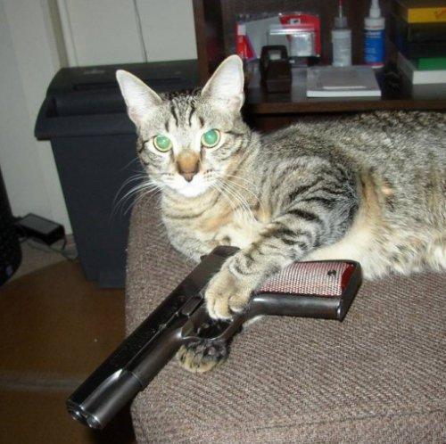 Кошки-гангстеры (10 фото)